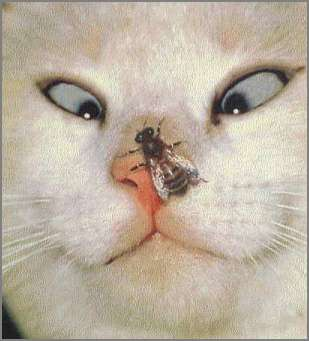 cat with bee on nose