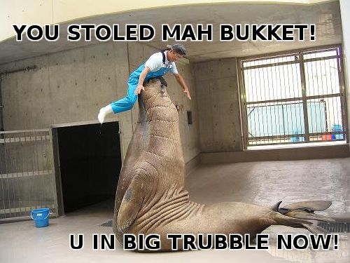 walrus is mad now
