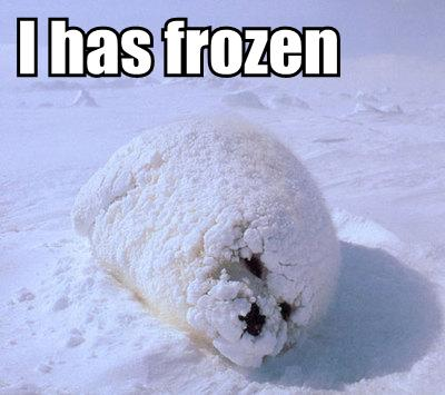 frozen baby seal