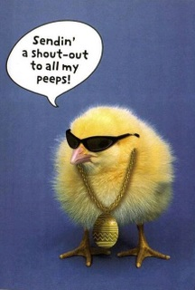 Sending a shout out to all my peeps - baby chicken