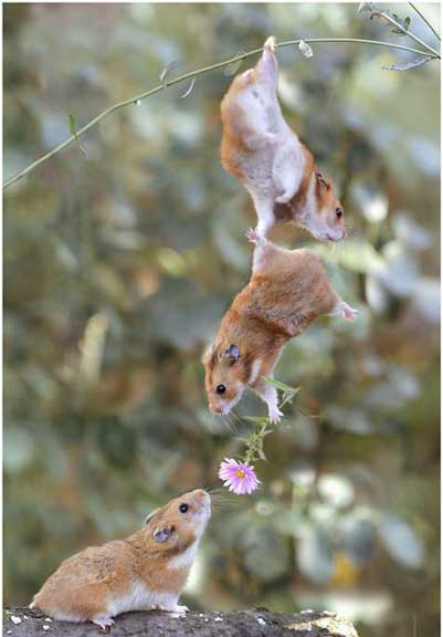 field mice in love