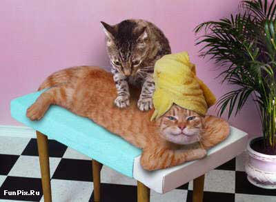 Cats giving massage