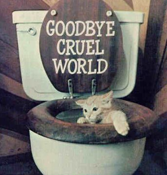 goodbye cruel world cat toilet suicide