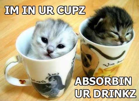 im in your cups absorbing your drinks