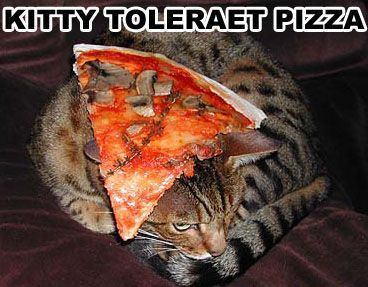 kitty tolerate pizza