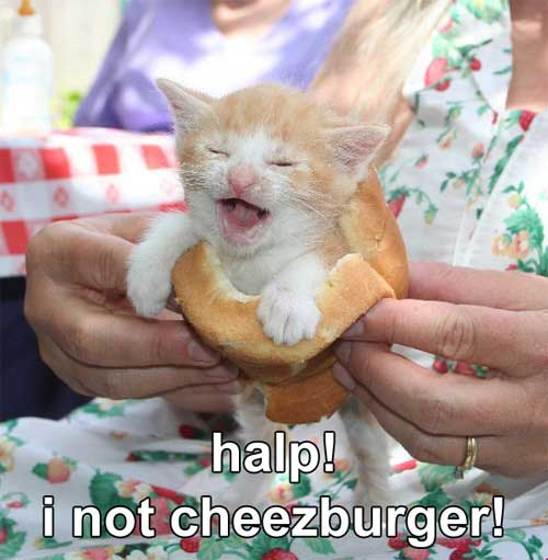 help i am not a cheeseburger