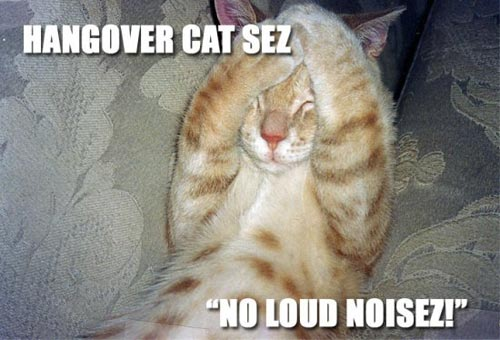 hangover cat says no loud noises