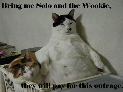 bring me solo and the wookie they will pay for this outrage