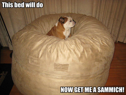 this bed will do now get me a sandwich