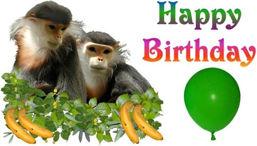 happy birthday monkies