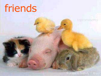 friends animals