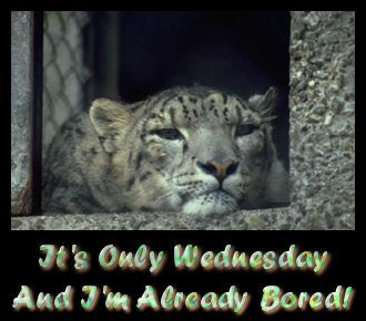 it's only wednesday and i'm already bored