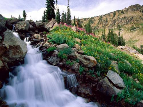 rushing waters of spring