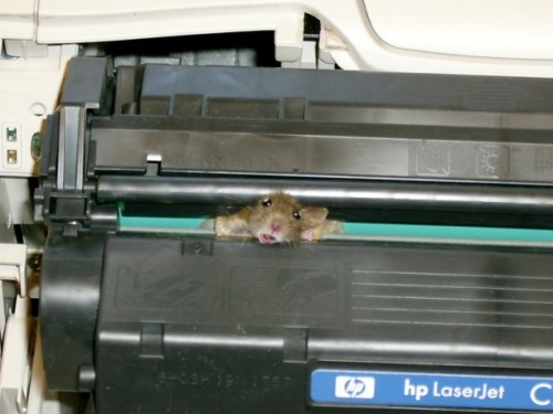 mouse stuck in typewriter