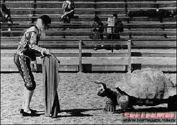 bull fighter fights a giant turtle with horns