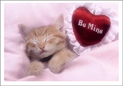 be mine kitten