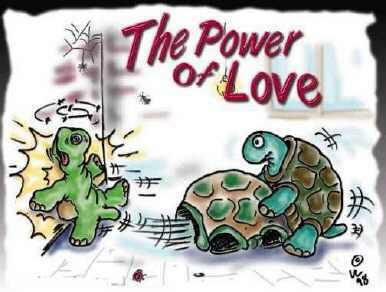 the power of loves turtles