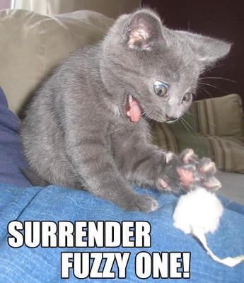 surrender fuzzy mouse