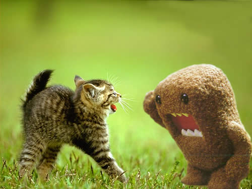 kitten fights brown fuzzy monster