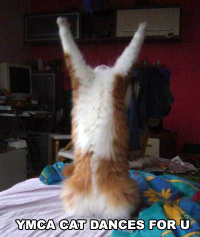 ymca cat dances for you