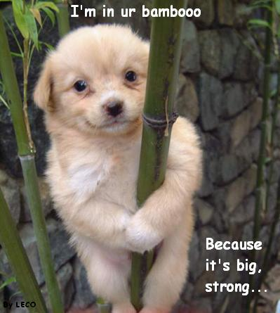 i'm in your bamboo because it's big strong