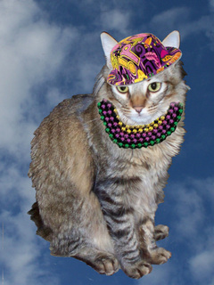 Mardi gras cat with beads