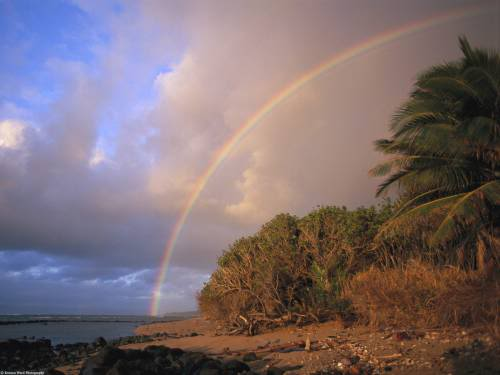 Tropical Rainbow