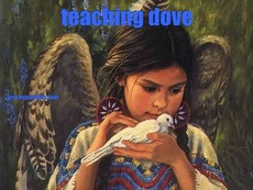 teaching dove