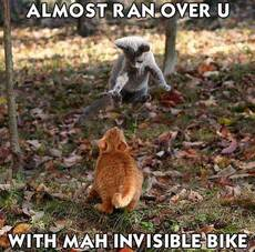 cats - invisible bike