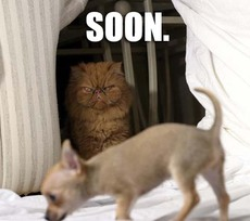 cat and dog soon