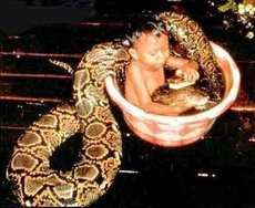 baby takes bath with giant snake
