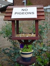 no pigeons in the birdhouse