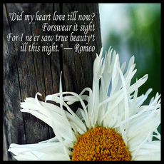did my heart love till now? forswear it sight for i never say true beauty till this night