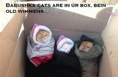 babushka cats are in your box being old women