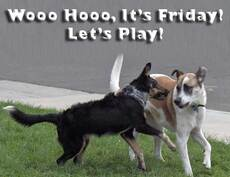 wooo hooo it's friday let's play dogs