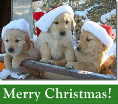 merry christmas puppies