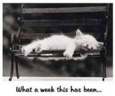 what a week this has been kitten